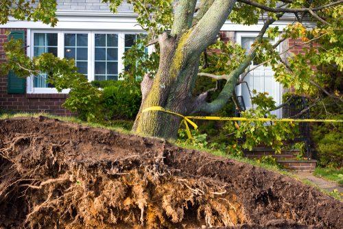 Wurzeln vom Nachbargrundstück - Beseitigungsanspruch