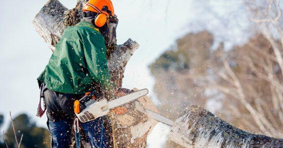 Behinderung von Baumfällarbeiten – Schadensersatzpflicht