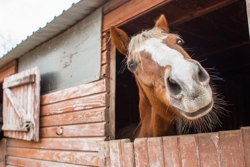 Tierpensions- bzw. Einstellungsvertrag - Haftung des Betreibers
