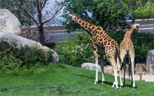 Verkehrssicherungspflicht in Tierpark bei Bodenunebenheiten und in historischem Gebäude