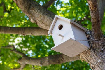 Geräuschbelästigung durch Vogelhaltung – Beseitigungsanspruch