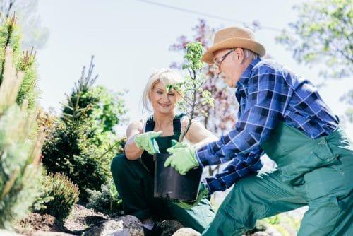 Pflanzenentfernungsanspruch eines Grundstücksnachbarn