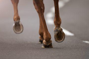 Tierhalterhaftung – Beaufsichtigung eines Pferdes an naher Landstraße