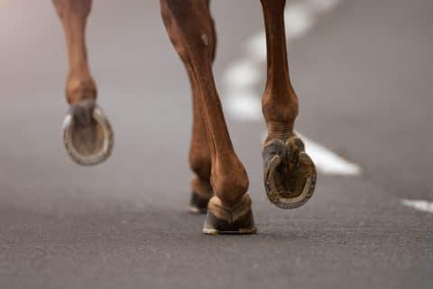 Tierhalterhaftung - Beaufsichtigung eines Pferdes an naher Landstraße