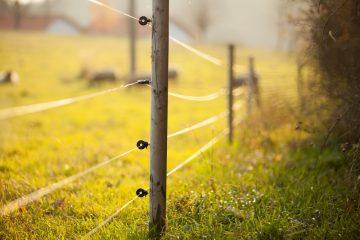 Mobiler Elektro-Weide-Zaun als Grundstückseinfriedung?