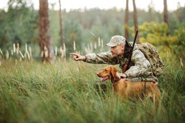 Wildschaden – ersatzpflichtige Wild- und Jagdschäden