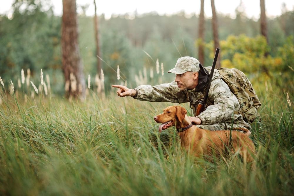 Wildschaden - ersatzpflichtige Wild- und Jagdschäden