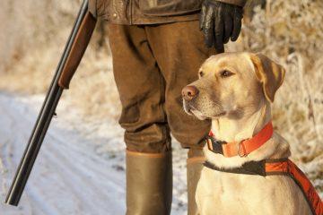 Drückjagd – Schadenersatz wegen getötetem Jagdhund