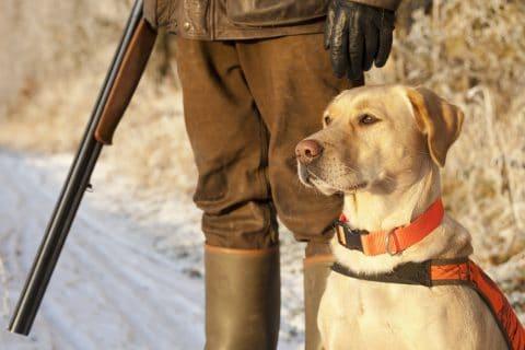 Drückjagd - Schadenersatz wegen getötetem Jagdhund