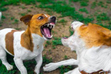 Bissverletzung eines Hundes durch anderen Hund – Behandlungskosten des verletzten Hundes