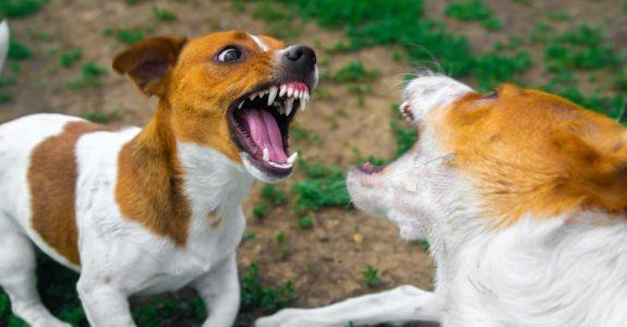 Bissverletzung eines Hundes durch anderen Hund - Behandlungskosten des verletzten Hundes