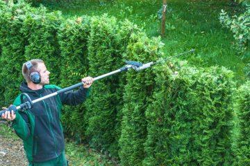 Hecke – zulässige Höhe und Abstand zum Grundstück des Nachbarn