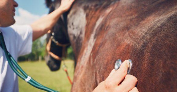 Tierarzthaftung für fehlerhafte Behandlung eines Pferdes