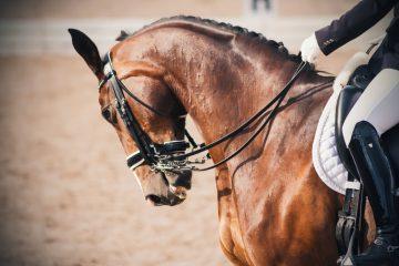 Kauf eines Dressurpferdes – Rücktritt aufgrund eines Sachmangels