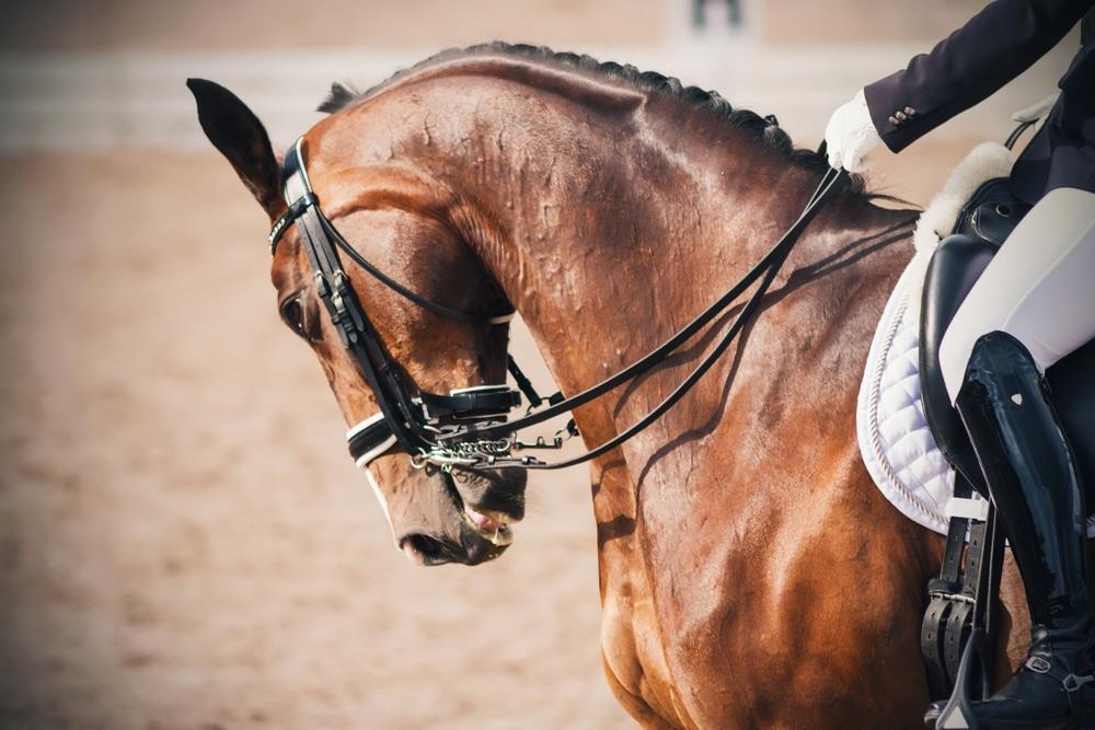 Kauf eines Dressurpferdes - Rücktritt aufgrund eines Sachmangels