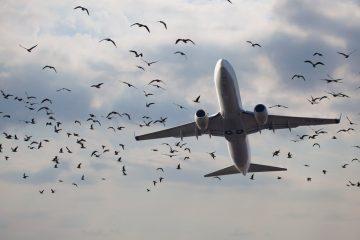 Fluggastrechte bei großer Verspätung – Vogelschlags auf einem Vorflug