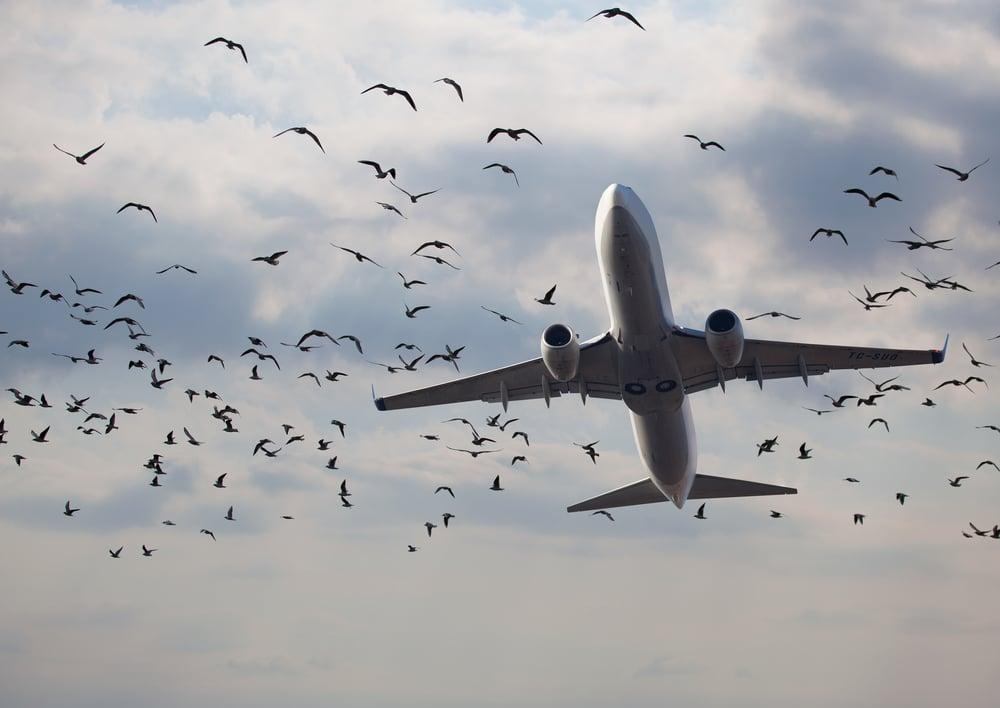 Fluggastrechte bei großer Verspätung - Vogelschlags auf einem Vorflug