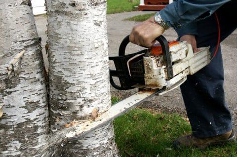 Fällen von Bäumen auf Nachbargrundstück wegen Grenzverlaufsirrtum - Privathaftpflichtversicherung