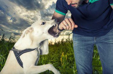 Tierhalterhaftung - überwiegendes Mitverschulden des Geschädigten