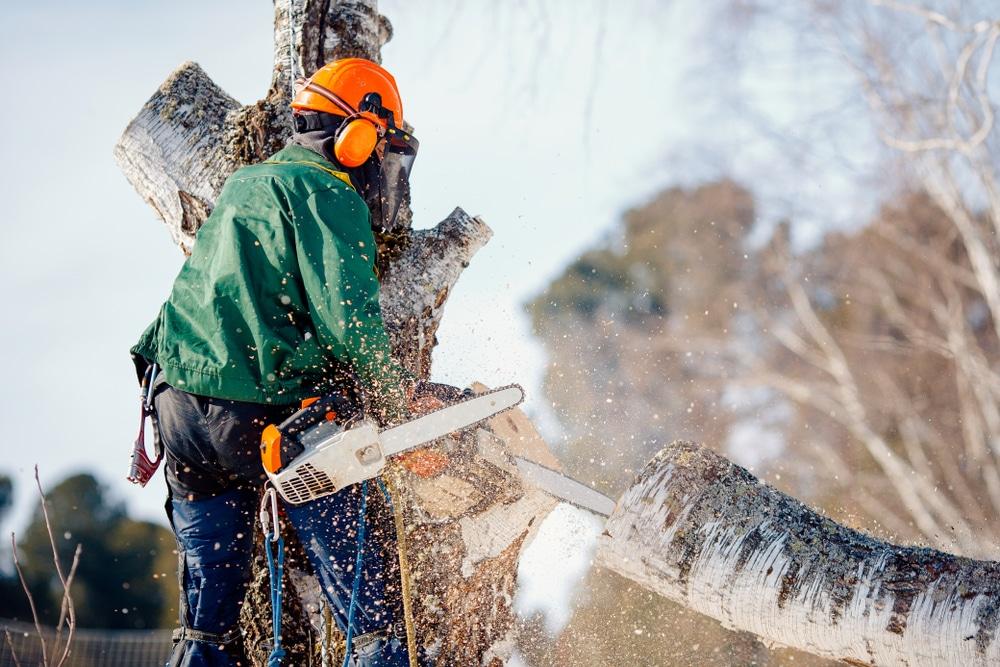 Schadenersatz für rechtswidrige Fällung eines Baumes