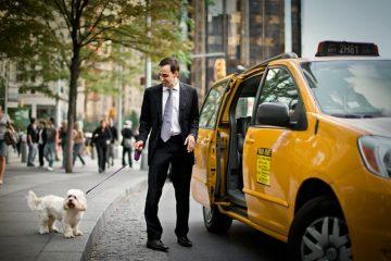 Verweigerung der Beförderung von Fahrgästen mit Hunden durch einen Taxifahrer