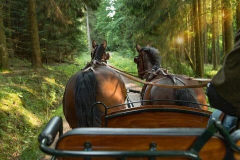 Pferdekutscher - absolute Fahruntüchtigkeit bei 1,1 Promille BAK