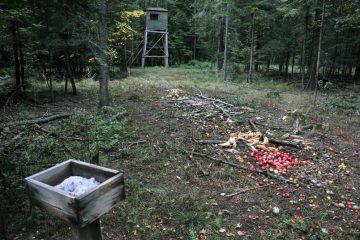 Jagdpächterhaftung für Wildschäden – Wildschadensmeldung per E-Mail