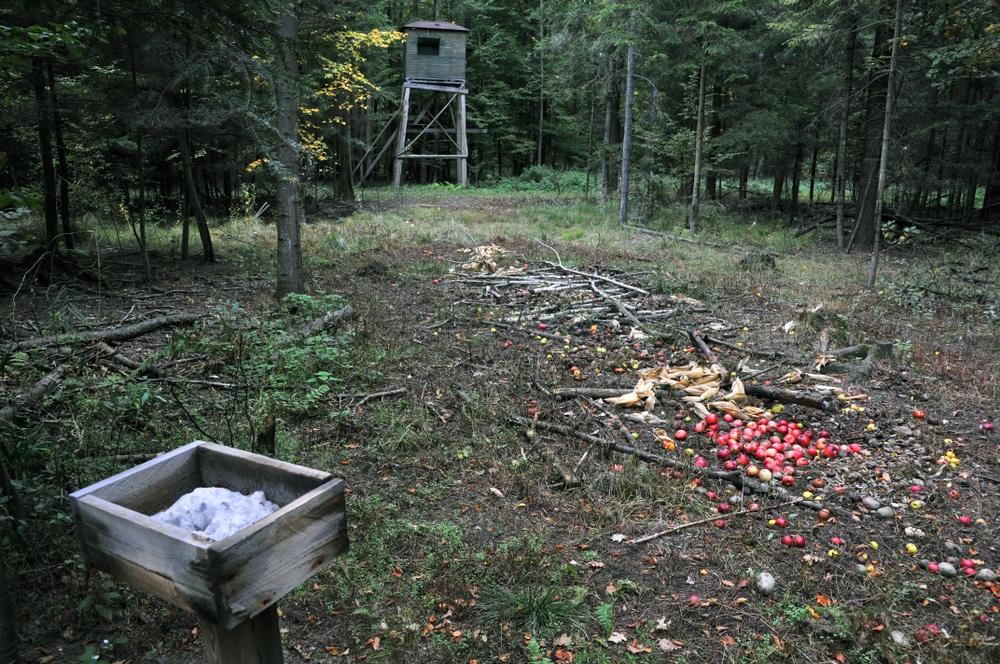 Jagdpächterhaftung für Wildschäden - Wildschadensmeldung per E-Mail