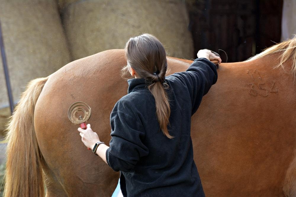 Gefährdungshaftung des Tierhalters – entgangenes Arbeitsentgelt