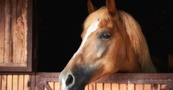 Einstweilige Verfügung auf Herausgabe eines Pferdes