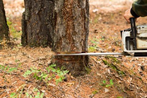 rechtswidrige Fällung eines Baumes - Schadenersatz