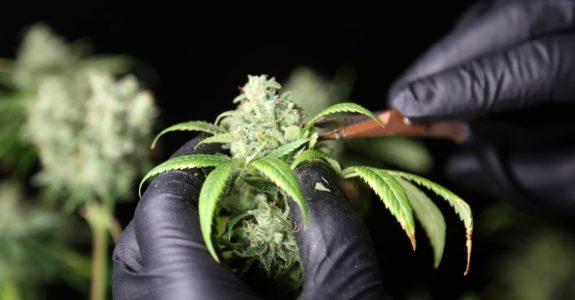 MPU-Gutachten - Trennungsvermögen bei gelegentlichem Cannabis-Konsum