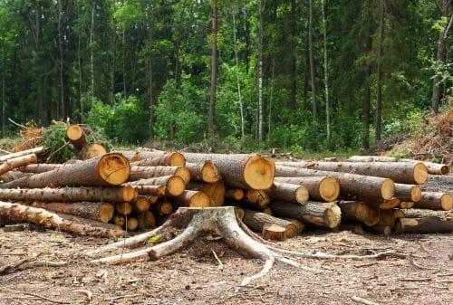Warnhinweise und Sicherungsmaßnahmen bei Baumfällarbeiten an Forstweg