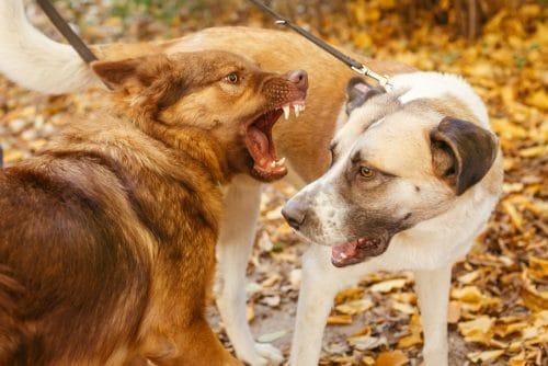 Tierhalterhaftung - Haftungsverteilung bei einer Auseinandersetzung zwischen Hunden