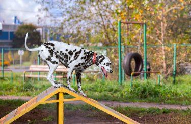 Hundespielplatz - Mitverschulden eines Geschädigten im Rahmen der Tierhalterhaftung