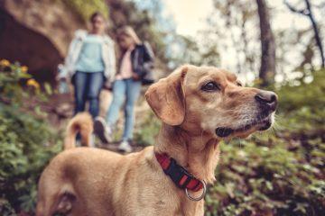 Tierhalterhaftung für freilaufenden Hund auf Waldweg