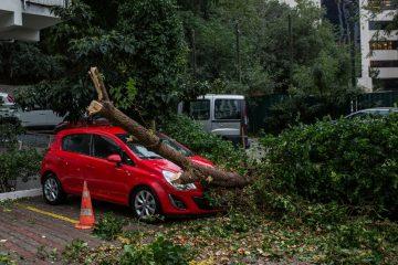 Amtspflichtverletzung wegen Beschädigung eines geparkten Fahrzeugs durch Astbruch