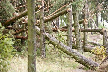 Waldbesitzerhaftung für waldtypische Gefahr eines Ast- oder Stammbruches
