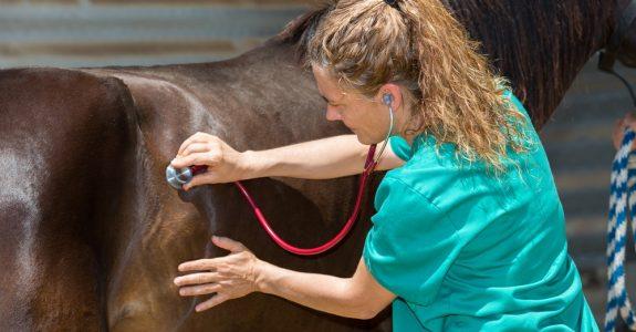 Tierarzthaftung - Beweislast für Abweichung vom medizinisch begründeten Erfahrungssatz