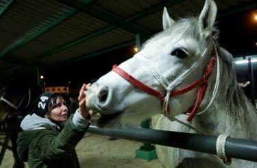 Pferdekauf – Abweichung der charakterlichen oder psychologischen Idealnorm als Mangel
