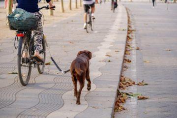 Radfahrersturz – Unfallursächlichkeit der Tiergefahr zweier rangelnder Hunde