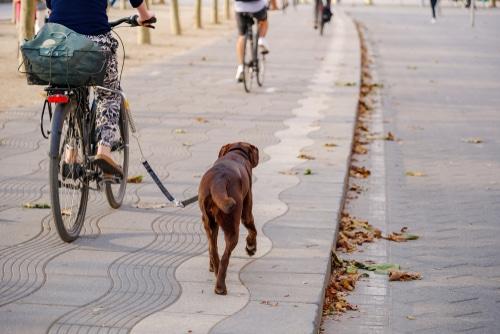Radfahrersturz - Unfallursächlichkeit der Tiergefahr zweier rangelnder Hunde