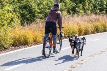 Tierhalterhaftung – Schmerzensgeld durch einen Hund verursachten Fahrradunfall
