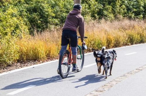 Tierhalterhaftung - Schmerzensgeld durch einen Hund verursachten Fahrradunfall