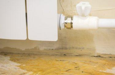 Leitungswasserschäden - Beschränkung des Risikoausschlusses auf echten Hausschwamm