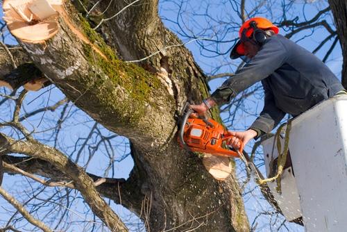 Haftung für bei Baumschnittarbeiten entstandene Schäden
