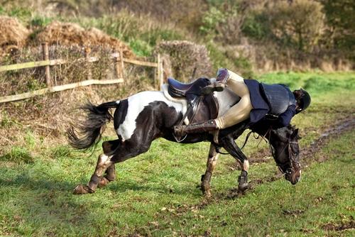 Tierhalterhaftung - Sturzunfall eines Reiters bei Ausbrechen eines Reitpferdes