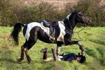 Tierhalterhaftung Reitunfall – Beweislastverteilung bei Mitverschulden des Geschädigten