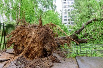 Verkehrssicherungspflichtverletzung bei Schadenseintritt durch einen umgestürzten Baum