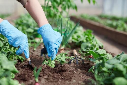 Verbotene Eigenmacht - Entziehung der Nutzung eines Gartenanteils durch verbotene Eigenmacht